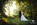 romantic+marquee+wedding+venue-island+hall-Cambridgeshire-2